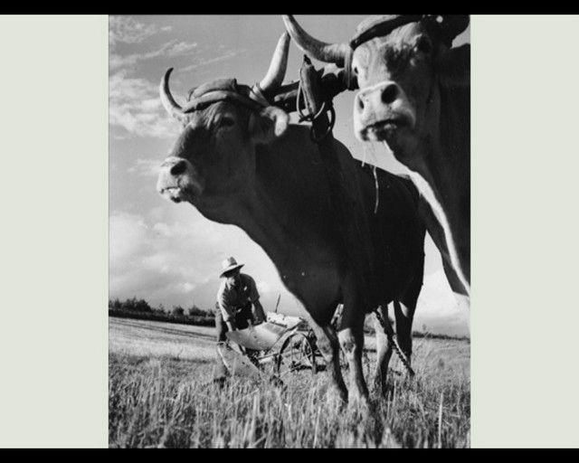 La vie à la campagne avant .... 3gvjarlo